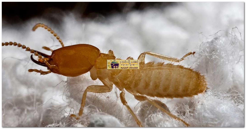 افضل شركة مكافحة النمل الابيض بجازان
