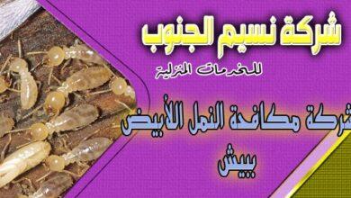 Photo of شركة مكافحة النمل الابيض ببيش