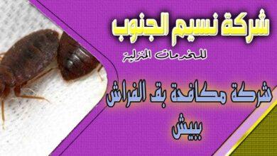 Photo of شركة مكافحة بق الفراش ببيش