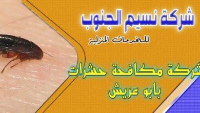 Photo of شركة مكافحة حشرات بابو عريش 0536589462