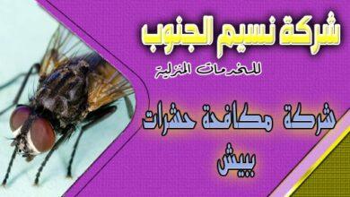 Photo of شركة مكافحة حشرات ببيش