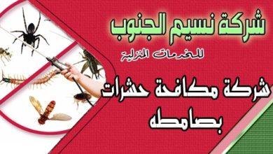 Photo of شركة مكافحة حشرات بصامطه