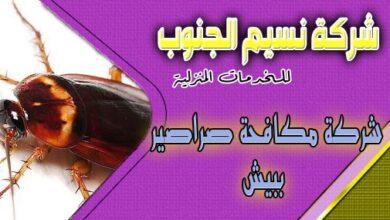 Photo of شركة مكافحة صراصير ببيش