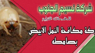 Photo of شركة مكافحة النمل الابيض بصامطه
