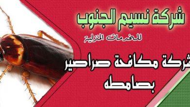 Photo of شركة مكافحة صراصير بصامطه