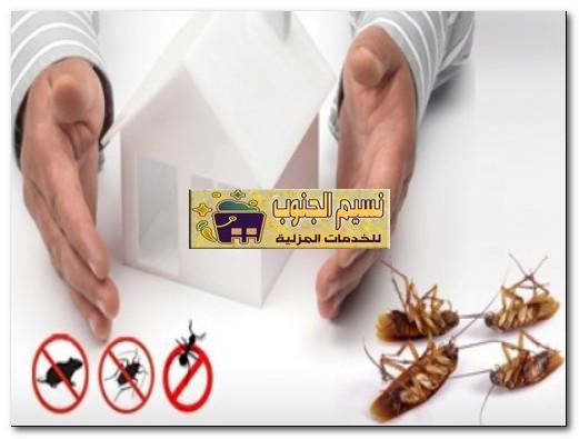 مكافحة حشرات ببيش